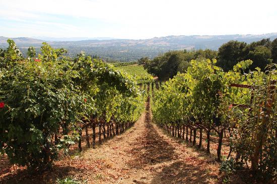 B. Wise Vineyards: The beautiful vines!