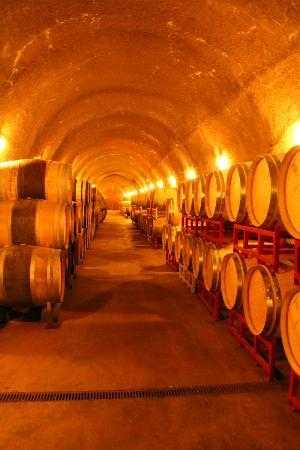 B. Wise Vineyards: The beautiful caves