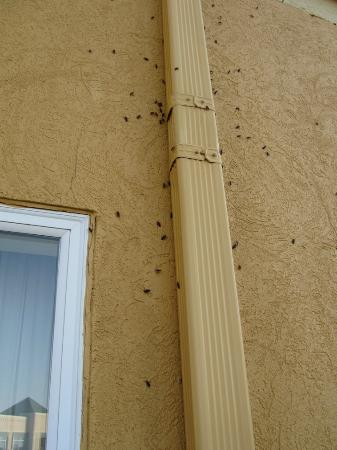 La Quinta Inn Peru Starved Rock State Park : Bugs on the outside of the hotel wall 1