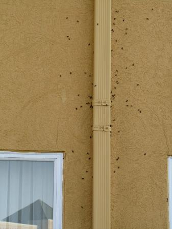 La Quinta Inn Peru Starved Rock State Park: Bugs on the outside of the hotel wall 3