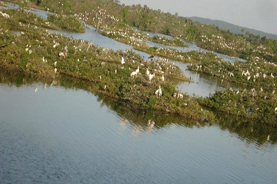 Kanchipuram, Indie: Islands in the Vedanthangal Bird Sanctuary