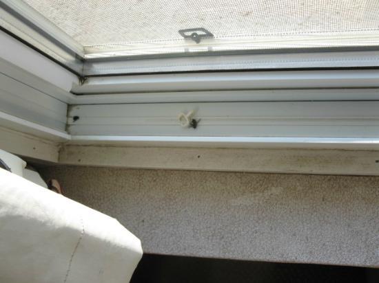 The Wawa Motor Inn : Dead flies