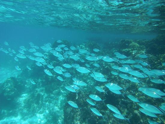Garrafon Natural Reef Park: a lot of fish !