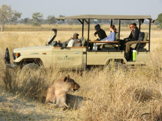 Kanana: Lion viewing