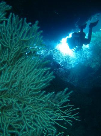 Papoo Diving and Fishing Charters, Nananu I Ra, Fiji : gorgonians and swim throughs