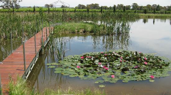 Petersons of Mudgee: Gardens behind Cellar Door