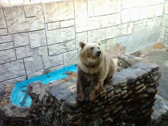 Cherokee Bear Zoo: Grizzly