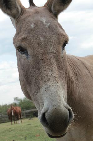 Malu: One of the friendly donkeys