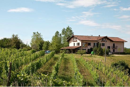 Cascina Papa Mora: vigne e cascina