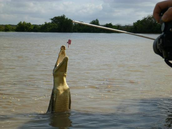 Mary River Wilderness Retreat & Caravan Park: Adelaide River Croc Cruises - mmmm dinner time LOL