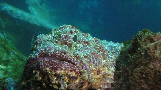 Galapagos Underwater: looks almost like a rock but it's a fish ;-)