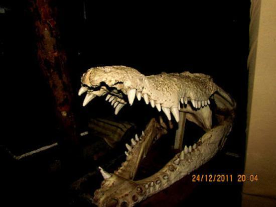 Madras Crocodile Bank : The Hulk