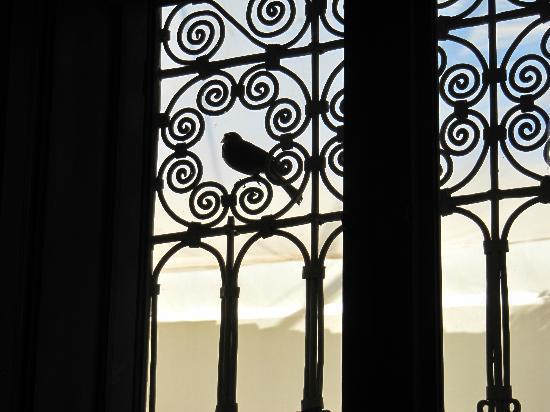 Dar Andamaure: 小鳥が窓ガラスをノック。