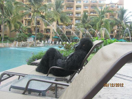 Villa del Palmar Flamingos: Gorilla out promoting Tropical Night