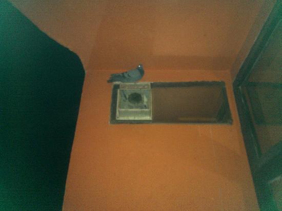 Hotel Alpine: Friendly pigeon on balcony
