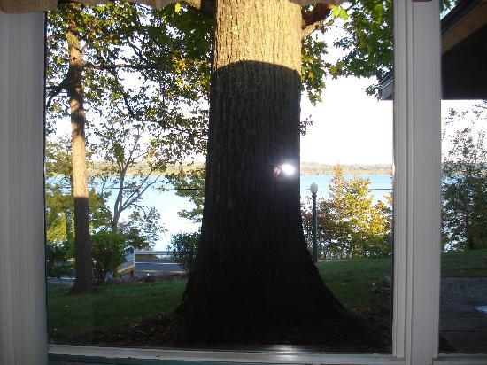 Whaleback Inn: Big tree trunk in front of window blocking views