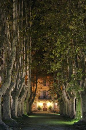 Le Chateau des Alpilles: Plane trees
