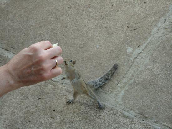 Cinnamon Lodge Habarana: Hand feeding Squirrel