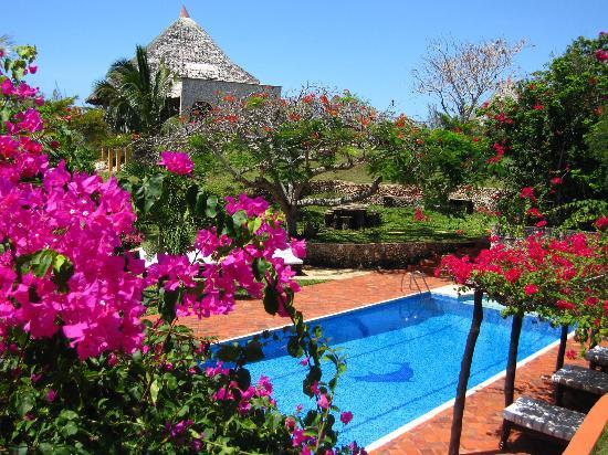 Tijara Beach: Beautiful pool & bougainvillea.