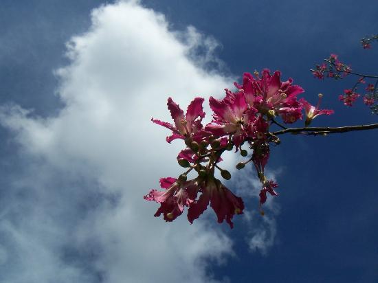 Mounts Botanical Garden: orchid tree