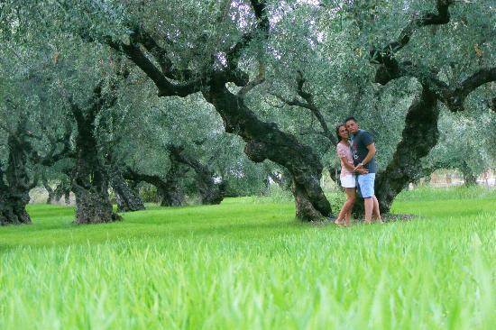 Castelli Hotel: Olive Tree Garden