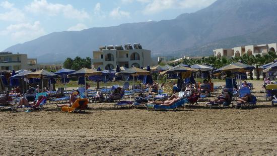 Hotel Delfina Beach: la plage et à l'arrière des petites résidences avec les chambres