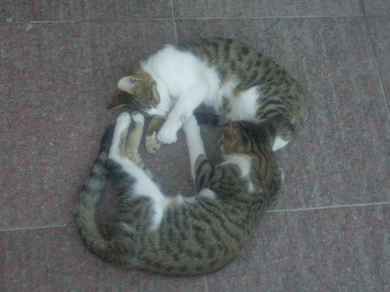 Bodrum Imperial : cats cute