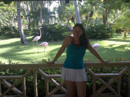 Iberostar Dominicana Hotel: en los bellos jardines