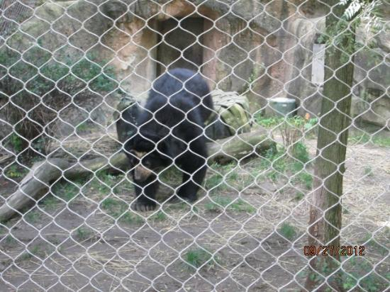 The Buffalo Zoo: bear