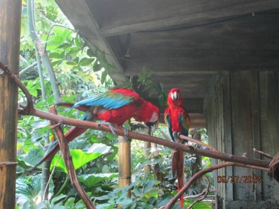 The Buffalo Zoo: Parrots in rainforest