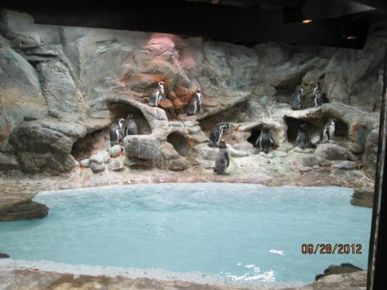 Aquarium of Niagara: penguins