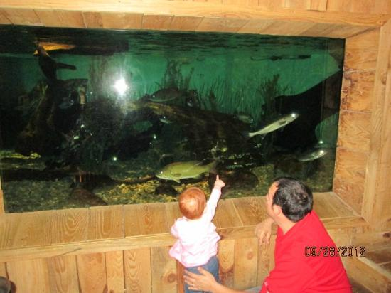 Aquarium of Niagara: fish of lake erie