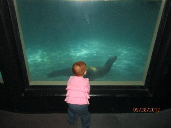 Aquarium of Niagara: indoor sealion tank