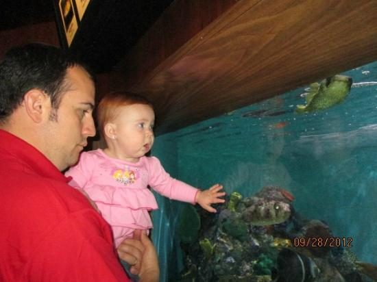 Aquarium of Niagara: blow fish