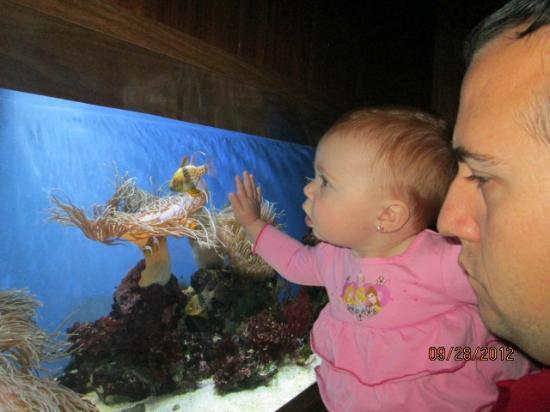 Aquarium of Niagara: clown fish