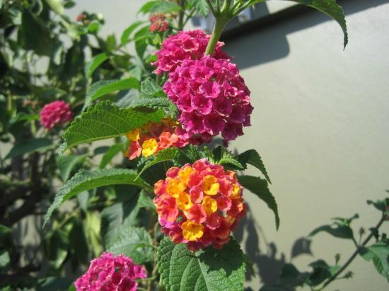 Armada Terrace Restaurant : pretty flowers