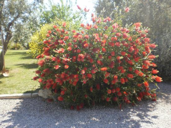 Locanda degli Etruschi: giardino
