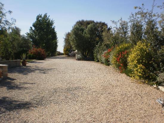 Locanda degli Etruschi: viale giardino