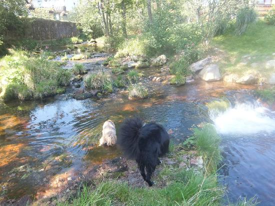 Hotel Adler-Post Obertal : Local stream to check out