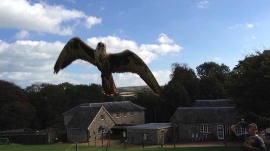 Appuldurcombe Farm: Sent towards me for the photo (sept 12)