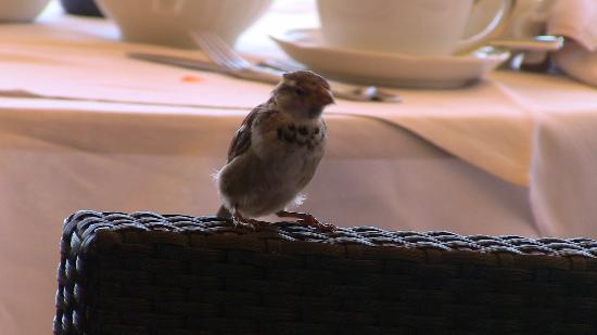 The Westin Europa & Regina, Venice: Breakfast guests