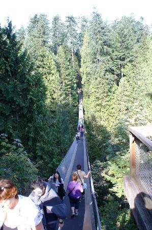 Capilano Suspension Bridge Park: Suspention bridge. Start point