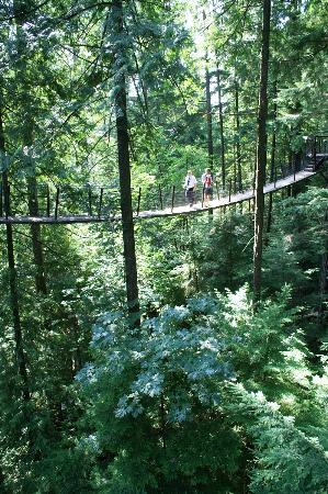 Capilano Suspension Bridge Park: Suspention bridge. View from cliff