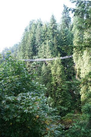 Capilano Suspension Bridge Park: Cliff