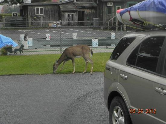 Blue Spruce Motel: Even the Deer stay here all night in grass