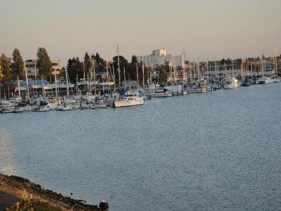 Executive Inn & Suites: view of Marina