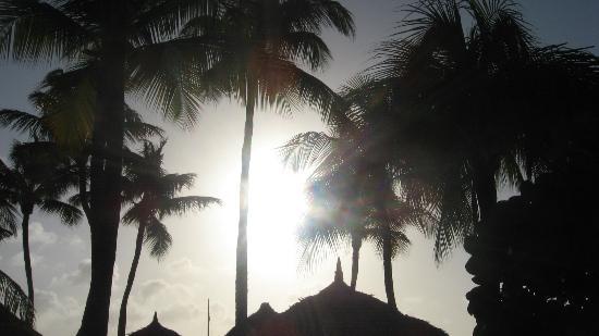 Divi Aruba Phoenix Beach Resort: Beautiful grounds
