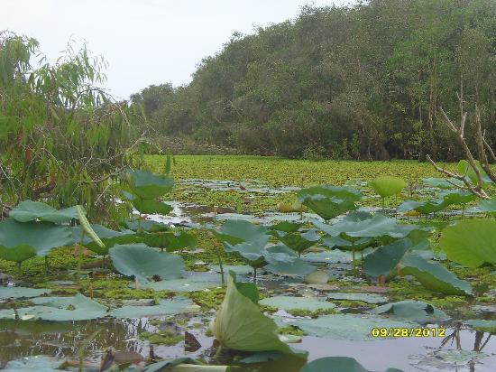 写真Tra Su Bird Sanctuary枚