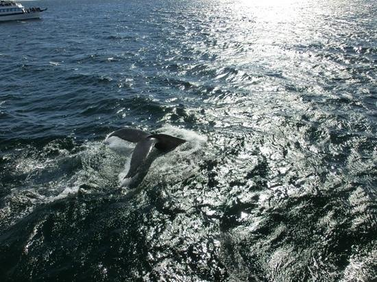 Hyannis Whale Watcher Cruises 사진