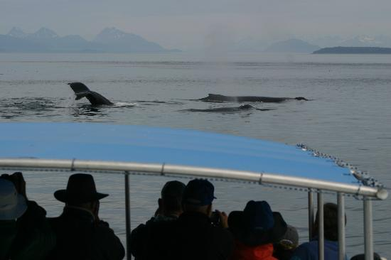 Cross Sound Express Whale Watching: Close encounters....again